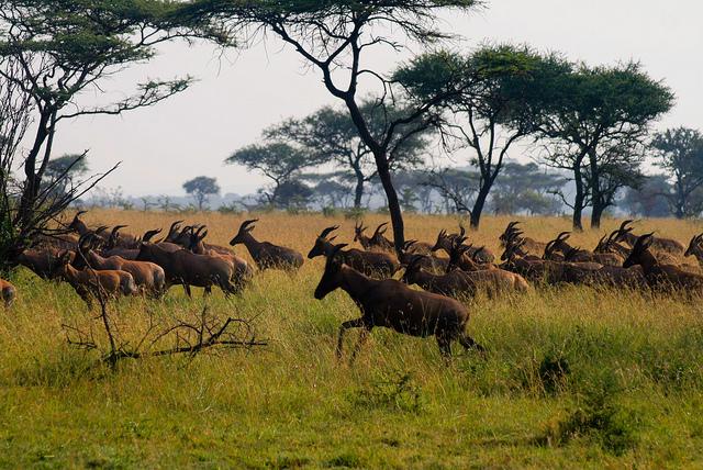 Приключенческий тур  Сафари по национальным паркам ТанзанииПриключенческий тур<br><br><br>Регион: Африка и острова Индийского океана<br>Страна: Танзания<br>Дата начала: 2018-05-28<br>Дата окончания: 2018-05-31<br>Количество человек: 3<br>С гидом: Нет